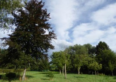 Tuin boomgaard 1