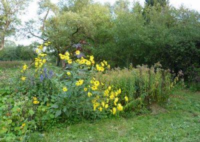 Tuin boomgaard gele struik
